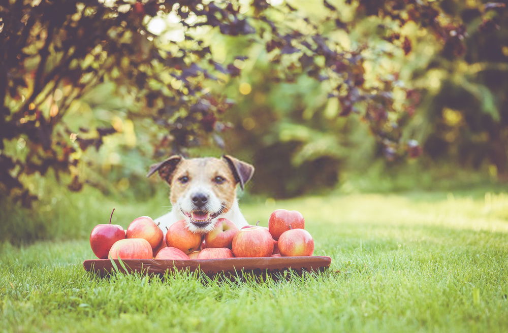 5 Questions You Might Be Afraid To Ask About Can Dogs Eat Apples?