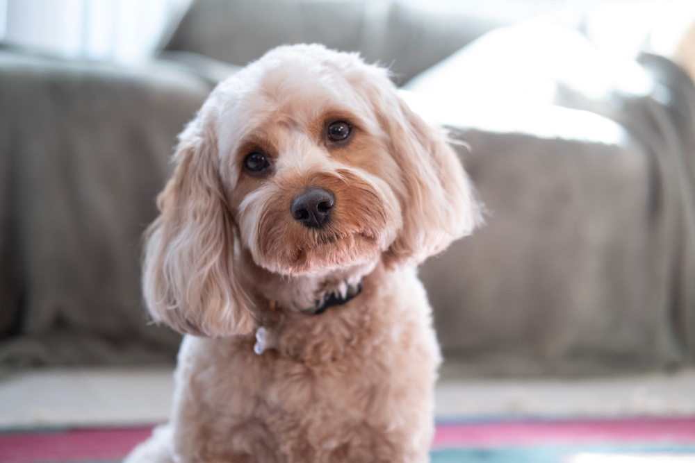 Dog Breed Facts, Highlights & Advice