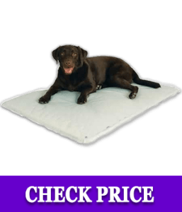 K&H Pet Products Cool Bed Review 2020