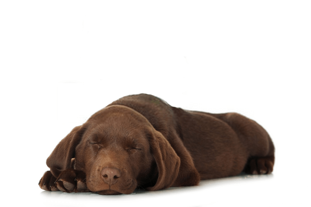 Do Dogs Know When They Are Dying