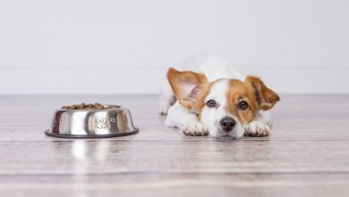 How long can dog go without eating?