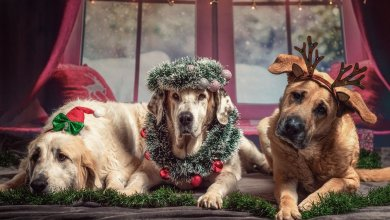 Dogs and Christmas Meals