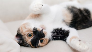 How to Keep Your Cat Safe in Your Home