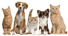 mutuelle chien, mutuelle chat, assurance animaux animalia protect