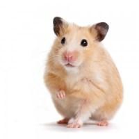 assurance santé hamster, assurance hamster devis gratuit
