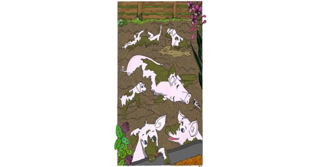 Koulukirjoissa tehotuotantoa ei usein kuvata totuudenmukaisesti. Kuvituskuvassa iloisia sikoja vilvoittelemassa mudassa.