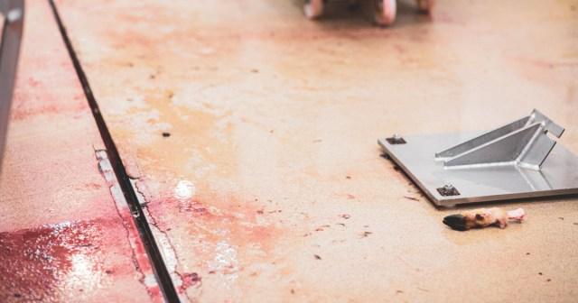 Teurastamon lattialle on jäänyt yksinäinen sorkka.