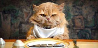 gatto che non mangia, cause e rimedi