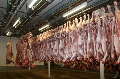 meat carcasses hanging butcher cows bones