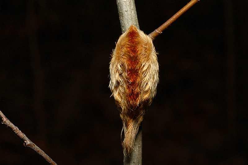 Мохнатые гусеницы пушистые