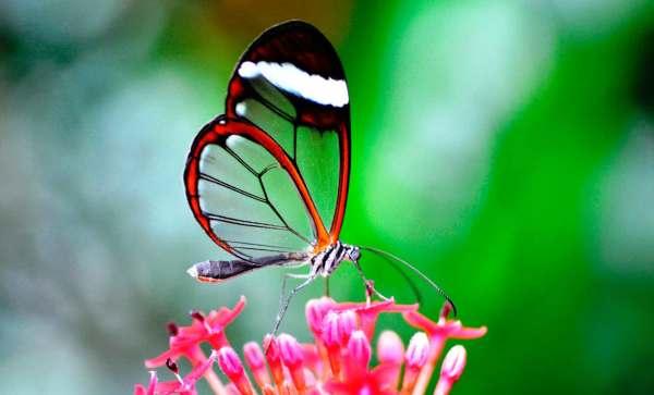 Метка: бабочки