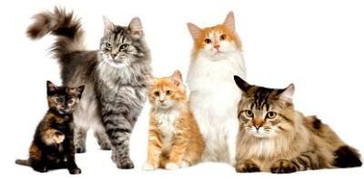 http://animallibrary.jp/category/catinfo/catsummary/