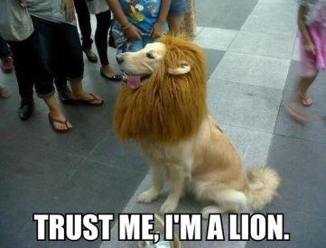 LOL lion