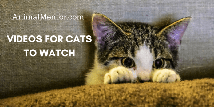 Videos for Cats to Watch