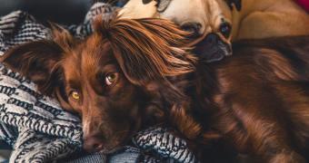 Best Dog Dewormer: Parasites Begone!