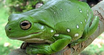 Types of frogs: A Species Guide