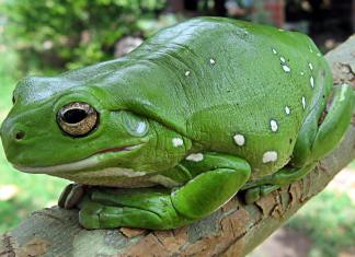 Types of Frogs