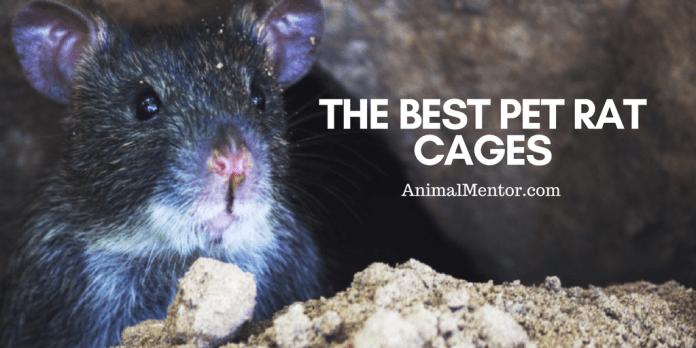 The Best Pet Rat Cages