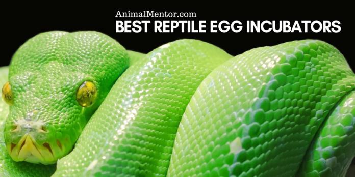Best Reptile Incubators