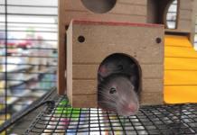Best Pet Rat Cages