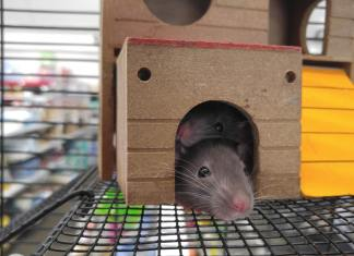 Best Pet Rat Cages