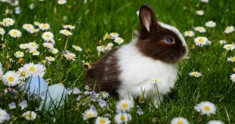 Best Rabbit Hutch: Keep Your Bunnies Comfortable All Year Round!