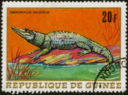 Guinea-1