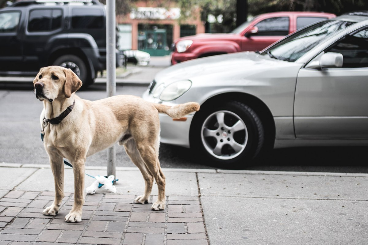 13-dog-gps-trackers-service-costs-compared-10