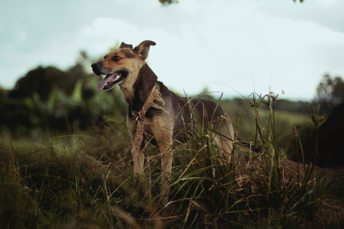 13-dog-gps-trackers-service-costs-compared-12