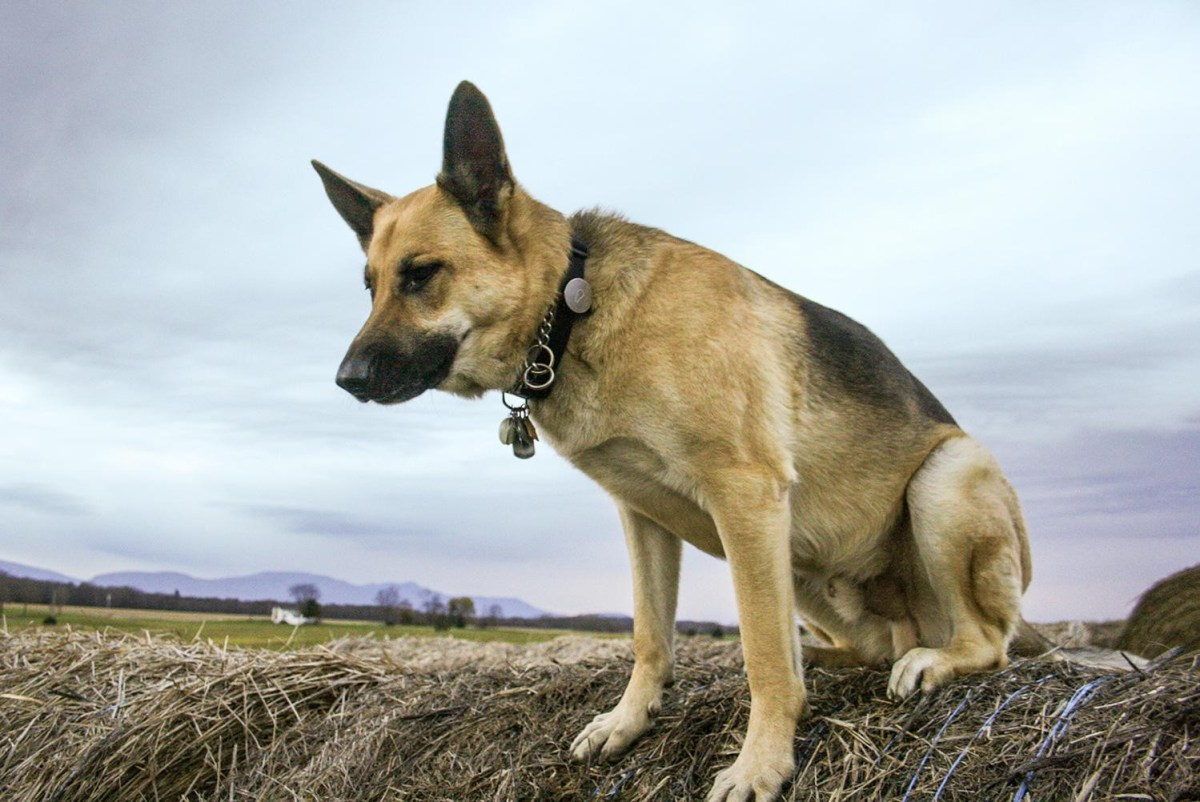 13-dog-gps-trackers-service-costs-compared-5