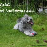 Get a ball!