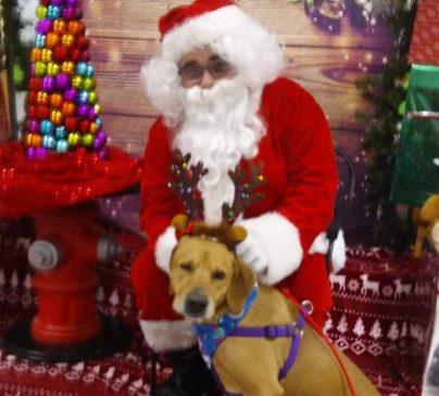 Annual ARC Christmas Party on Sunday, December 1, 2019