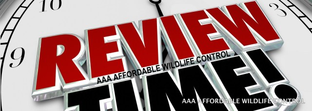 REVIEWS –  Wildlife Removal Toronto Reviews – AAA Affordable Wildlife Control