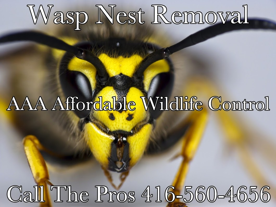 Wasp Nest Removal Near Me, Affordable Wasp Removal Service