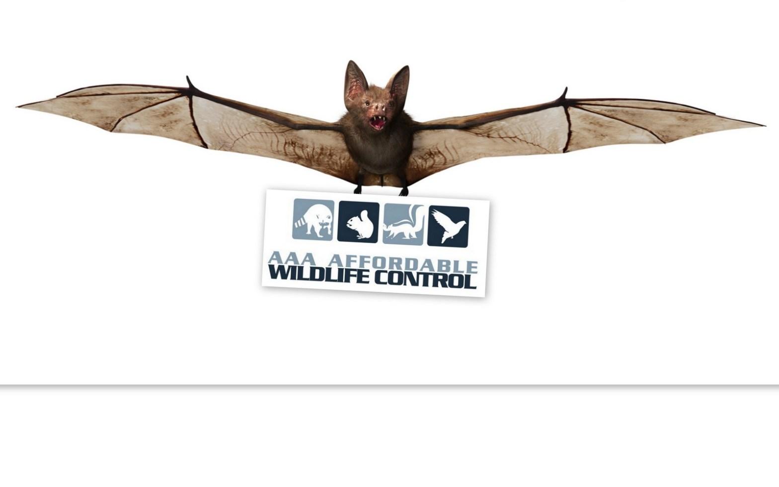Affordable Bat Removal Toronto - Animal Removal Toronto
