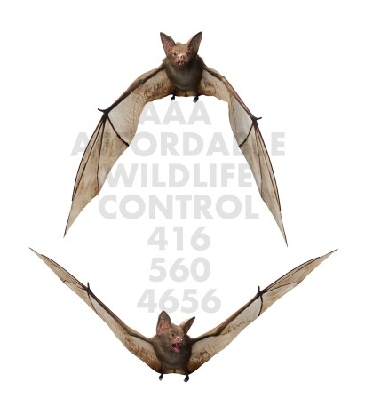 Affordable Bat Removal Toronto - Affordable Wildlife Control