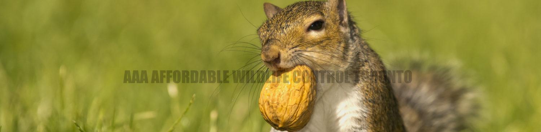 Animal Removal Service Squirrel Control