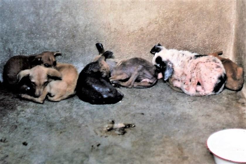 Puppies, Dog pound, starvef