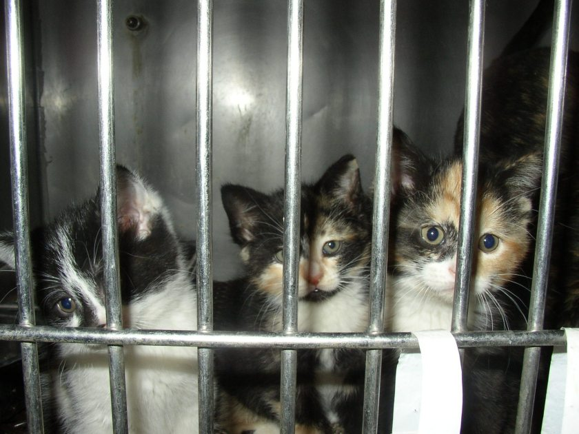 Kittens, rescue, animal rescue,, abandoned, unwanted