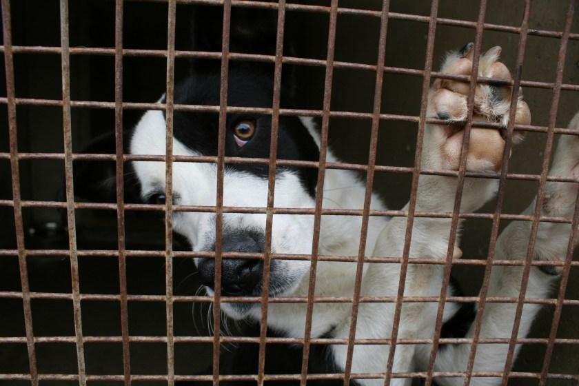 dog, cage