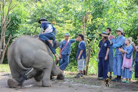Tourists abroad risking life and limb.