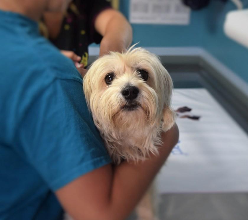 Veterinary surgeon, veterinarian, dog, operating table