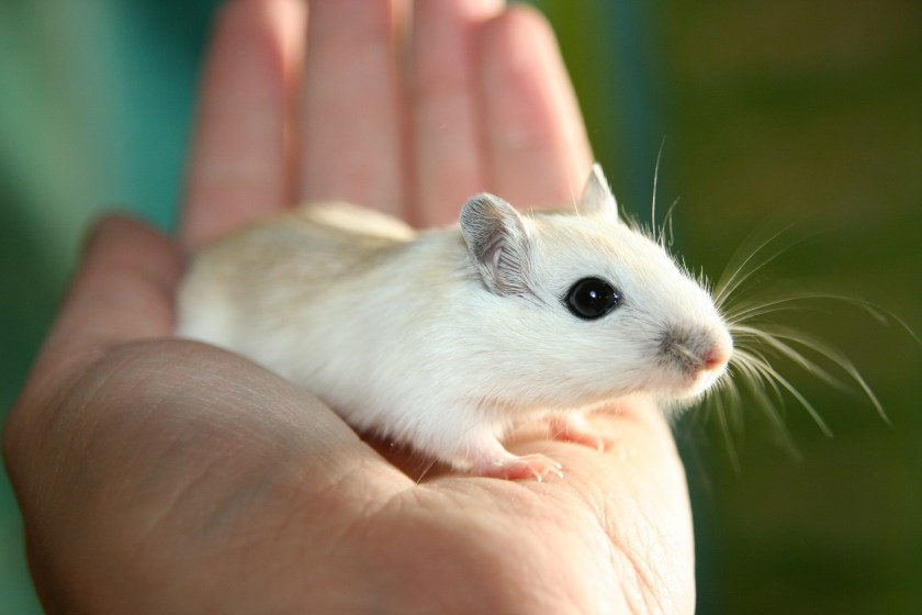 mouse, human hand