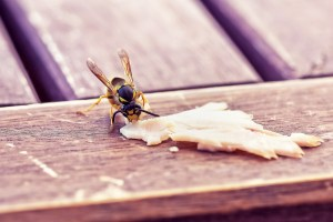 Wasp on picnic table, intolerance to wasps, hatred of wasps, fear of wasps