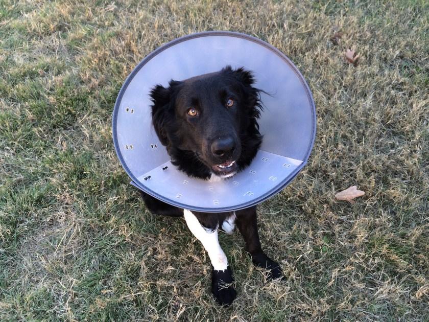 Dog, sick, veterinary treatment, veterinary surgeon