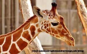 Zoonasia, zoo animal culling, cruelty to zoo animals