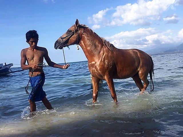 Hores abuse, pony, Gili Islandss