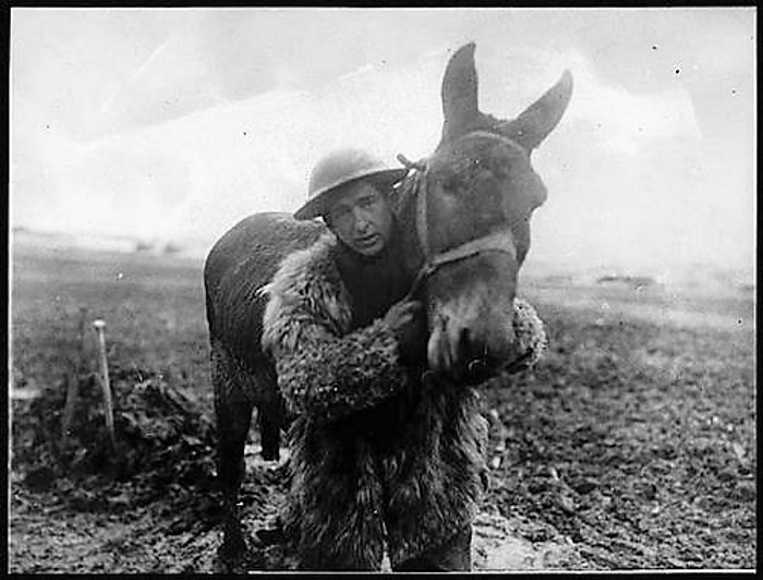 First World War mule and her handler.