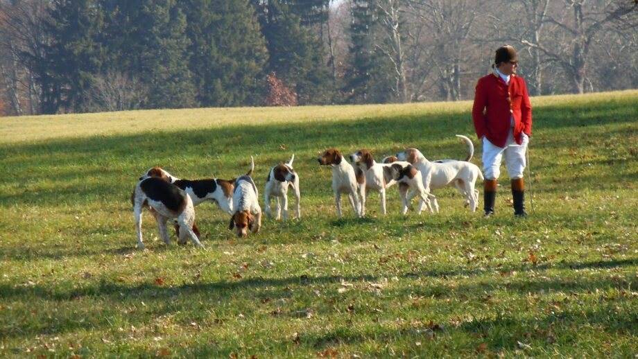 "Hunting with dogs and the ""unenforceable"" ban."