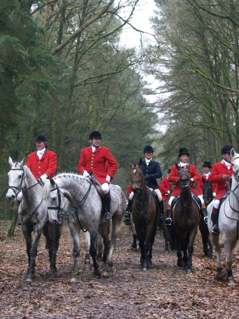 Fox hunt, Hunting Act 2004, cruelty to foxes, hunting
